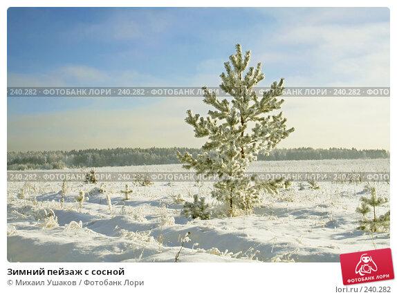Зимний пейзаж с сосной, фото № 240282, снято 10 января 2008 г. (c) Михаил Ушаков / Фотобанк Лори