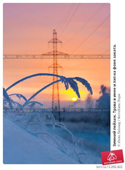 Купить «Зимний пейзаж. Трава в инее и лэп на фоне заката.», фото № 2292422, снято 22 января 2011 г. (c) Икан Леонид / Фотобанк Лори