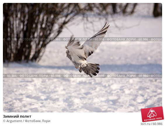 Зимний полет, фото № 60986, снято 6 февраля 2007 г. (c) Argument / Фотобанк Лори