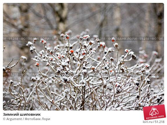 Купить «Зимний шиповник», фото № 51218, снято 18 декабря 2006 г. (c) Argument / Фотобанк Лори