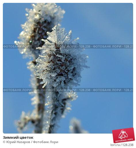 Зимний цветок, фото № 128238, снято 30 декабря 2006 г. (c) Юрий Назаров / Фотобанк Лори