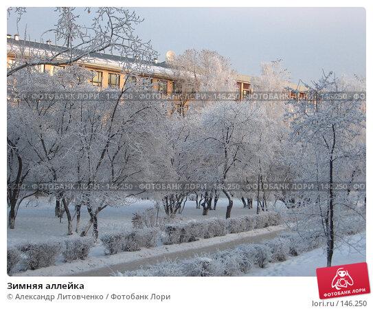 Зимняя аллейка, фото № 146250, снято 8 декабря 2007 г. (c) Александр Литовченко / Фотобанк Лори