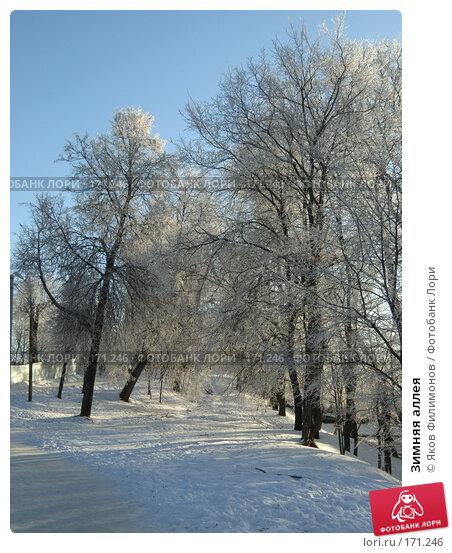 Зимняя аллея, фото № 171246, снято 8 января 2008 г. (c) Яков Филимонов / Фотобанк Лори