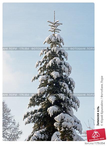 Зимняя ель, фото № 179054, снято 18 ноября 2007 г. (c) Юрий Брыкайло / Фотобанк Лори