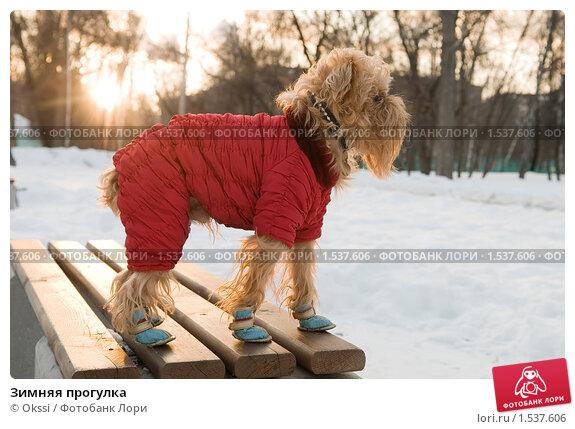 Купить «Зимняя прогулка», фото № 1537606, снято 8 марта 2010 г. (c) Okssi / Фотобанк Лори