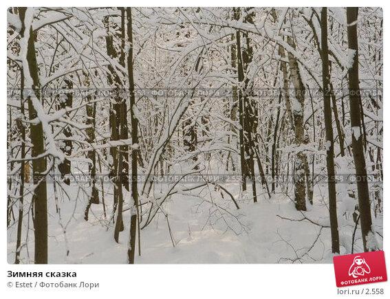 Зимняя сказка, фото № 2558, снято 23 апреля 2017 г. (c) Estet / Фотобанк Лори