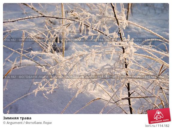 Зимняя трава, фото № 114182, снято 28 декабря 2004 г. (c) Argument / Фотобанк Лори