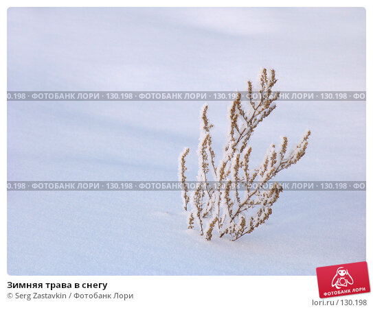 Зимняя трава в снегу, фото № 130198, снято 25 марта 2005 г. (c) Serg Zastavkin / Фотобанк Лори