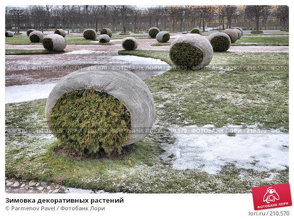 Зимовка декоративных растений, фото № 210570, снято 13 февраля 2008 г. (c) Parmenov Pavel / Фотобанк Лори