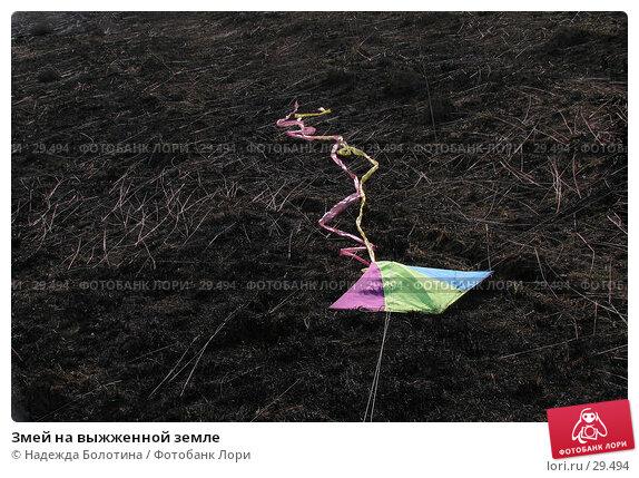 Купить «Змей на выжженной земле», фото № 29494, снято 30 апреля 2006 г. (c) Надежда Болотина / Фотобанк Лори
