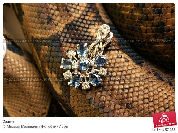 Купить «Змея», фото № 57258, снято 19 марта 2006 г. (c) Михаил Малышев / Фотобанк Лори