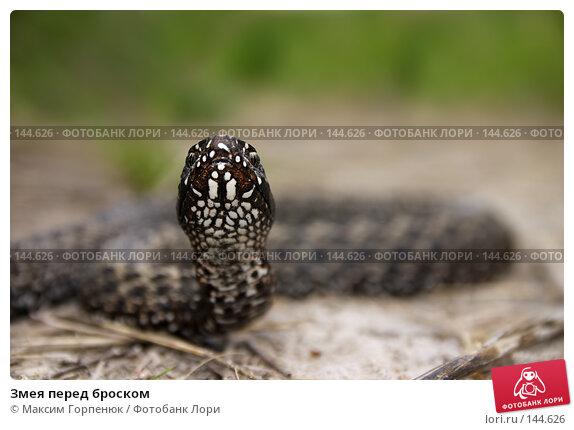 Змея перед броском, фото № 144626, снято 27 апреля 2006 г. (c) Максим Горпенюк / Фотобанк Лори