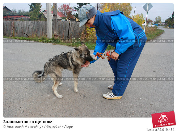 С щенком знакомство
