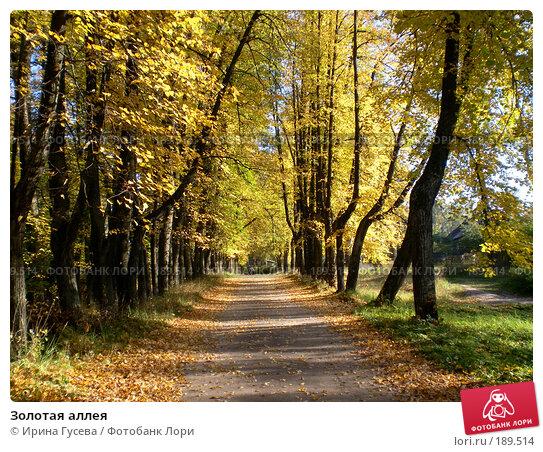 Купить «Золотая аллея», фото № 189514, снято 25 сентября 2007 г. (c) Ирина Гусева / Фотобанк Лори