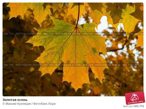Купить «Золотая осень», фото № 495774, снято 4 октября 2008 г. (c) Максим Кузнецов / Фотобанк Лори