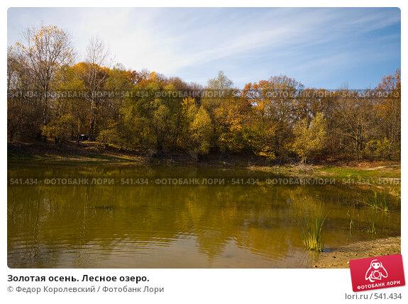 Купить «Золотая осень. Лесное озеро.», фото № 541434, снято 3 ноября 2008 г. (c) Федор Королевский / Фотобанк Лори
