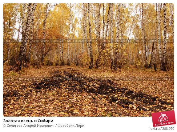 Купить «Золотая осень в Сибири», фото № 288970, снято 1 октября 2006 г. (c) Селигеев Андрей Иванович / Фотобанк Лори