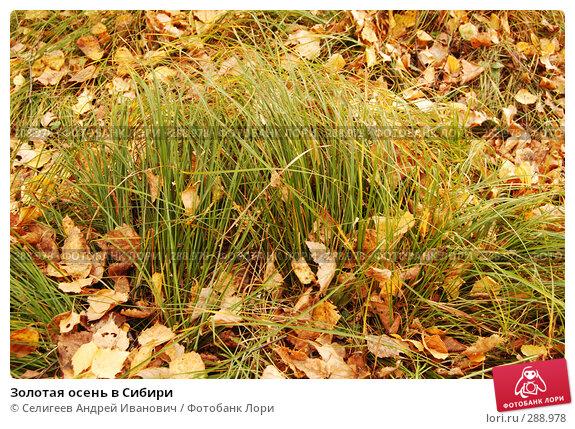 Купить «Золотая осень в Сибири», фото № 288978, снято 1 октября 2006 г. (c) Селигеев Андрей Иванович / Фотобанк Лори