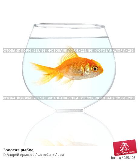 Золотая рыбка, фото № 285198, снято 19 января 2017 г. (c) Андрей Армягов / Фотобанк Лори