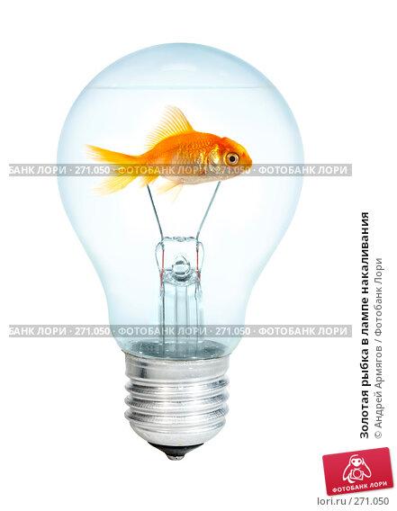 Золотая рыбка в лампе накаливания, фото № 271050, снято 20 января 2017 г. (c) Андрей Армягов / Фотобанк Лори