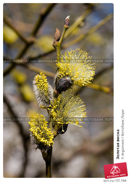 Золотая весна, фото № 57194, снято 14 апреля 2007 г. (c) Argument / Фотобанк Лори