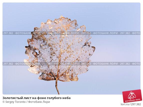 Золотистый лист на фоне голубого неба, фото № 297382, снято 11 мая 2008 г. (c) Sergey Toronto / Фотобанк Лори
