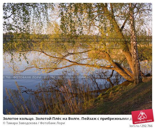 Золотое кольцо. Золотой Плёс на Волге. Пейзаж с прибрежными деревьями, освещёнными последними лучами солнца, эксклюзивное фото № 292766, снято 11 мая 2008 г. (c) Тамара Заводскова / Фотобанк Лори
