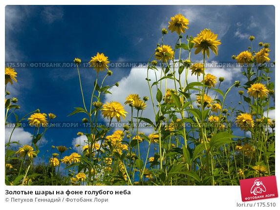 Золотые шары на фоне голубого неба, фото № 175510, снято 1 августа 2007 г. (c) Петухов Геннадий / Фотобанк Лори
