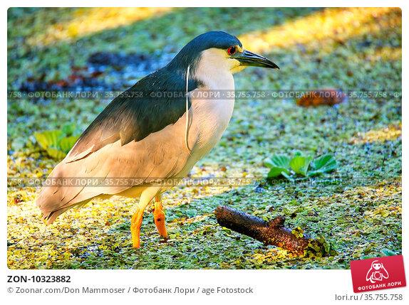 ZON-10323882. Стоковое фото, фотограф Zoonar.com/Don Mammoser / age Fotostock / Фотобанк Лори