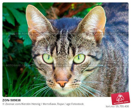 ZON-509838. Стоковое фото, фотограф Zoonar.com/Kerstin Hennig / age Fotostock / Фотобанк Лори